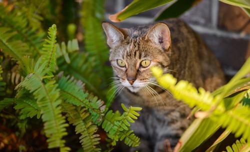 I gatti e le piante tossiche