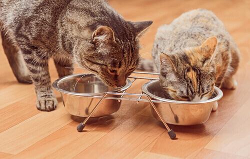 5 ortaggi consentiti ai gatti