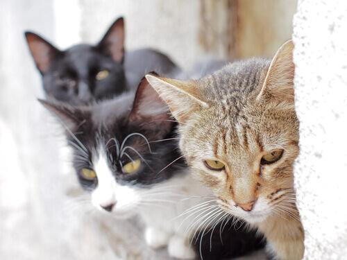 Fukuoka: l'isola dei gatti
