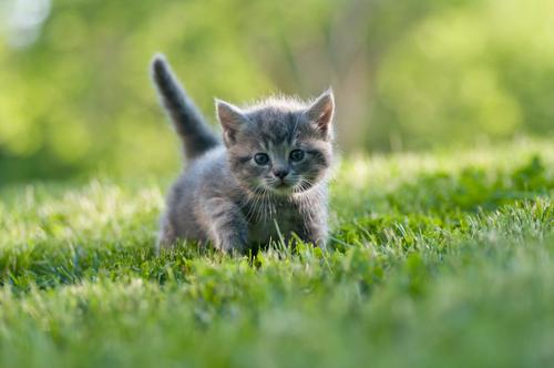 Aspetti da tenere in considerazione prima di prendere un gatto