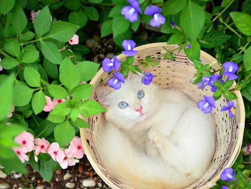 Curiosità sorprendenti sulla sordità dei gatti albini