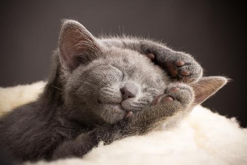 Perché i gatti impastano?