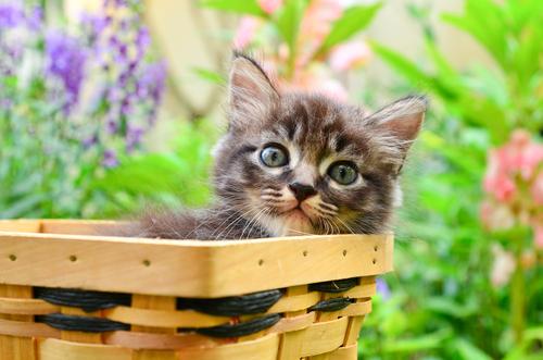 gatto-cesta