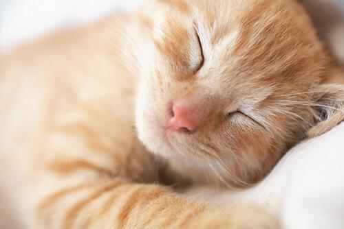 gatto-che-dorme