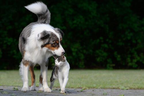 Le differenze tra padroni di cani e gatti
