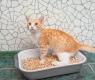 gatto-e-lettiera