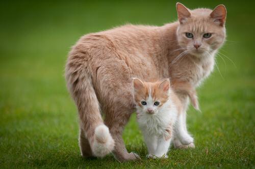 Osservazioni sull'istinto materno delle gatte verso i loro cuccioli