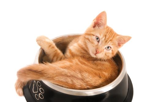 gatto-e-piatto