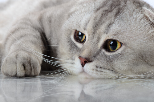 Conoscete l'oroscopo felino?