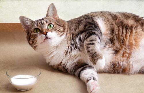 I problemi di salute dei gatti sedentari