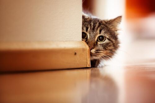 Cosa fare se al gatto sanguina il naso