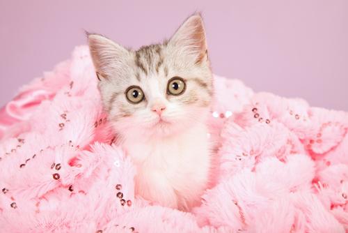 Un gatto muore intossicato dopo che la sua padrona lo tinge di rosa