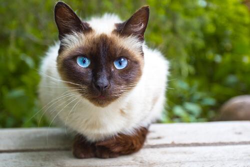 Arricchimento ambientale per i gatti