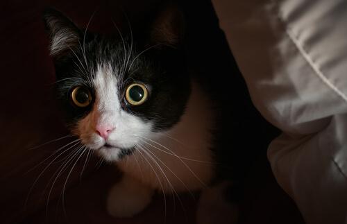 Comportamenti conflittuali nei gatti: paura, fobia e ansia