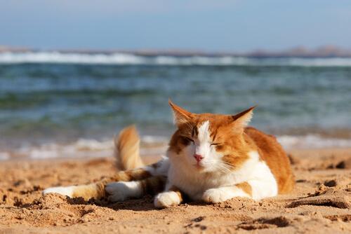 Lo spirito di indipendenza dei gatti