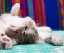 gatto-sul-letto