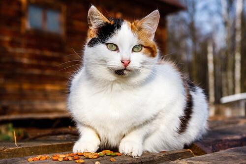 Segnali di invecchiamento nei gatti