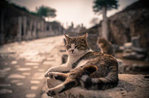 Da dove vengono i gatti? Da quanto tempo ci accompagnano?
