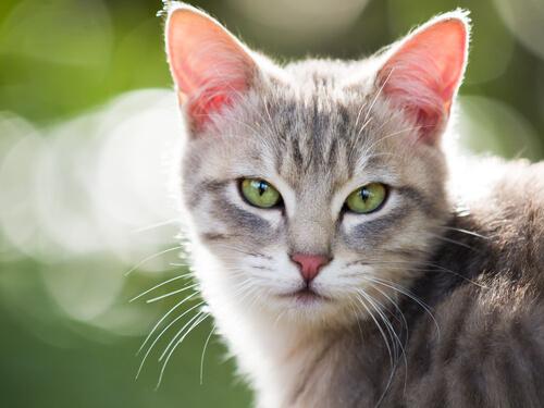 Gatti e gas intestinali