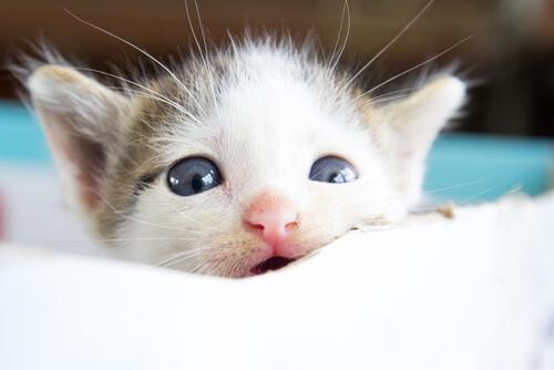 Gli animali piangono?