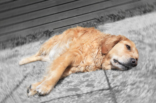 Farmaci per umani nocivi per il cane