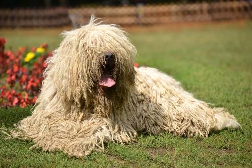 Le 8 razze di cani più curiose