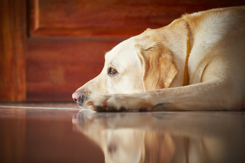 6 soluzioni all'ansia da separazione nei cani