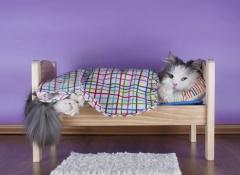 letto-gatto