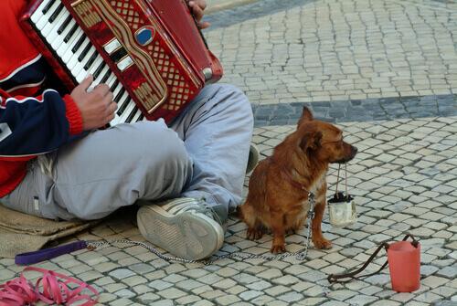 mendicante e cane 2