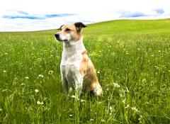 psicologia-canina