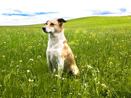 Le basi della psicologia canina