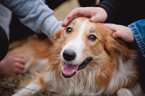 Ecco come non si deve salutare un cane
