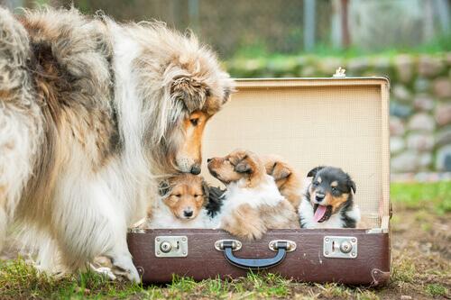 Trasformare vecchie valigie in cucce per cani