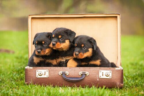 valigia-letto-cane2