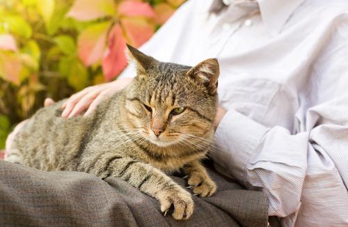 Risultati immagini per gatto anziano