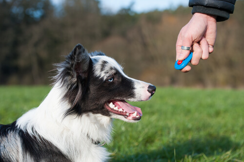 Addestrare i cani con il clicker