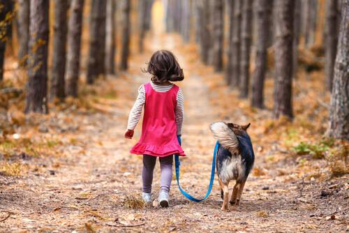Un cane protegge durante tutta la notte una bambina sperduta in un bosco