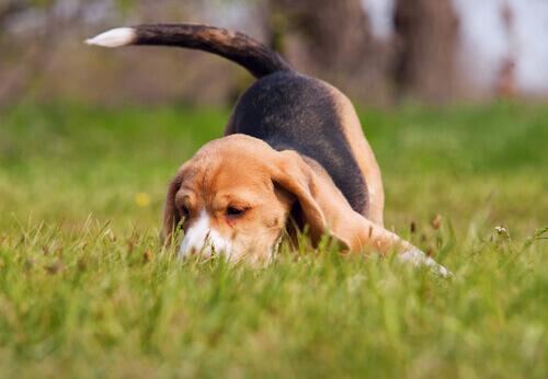 Il naso dei cani: curiosità