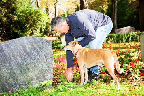 Un cane rimane sulla tomba del suo padrone