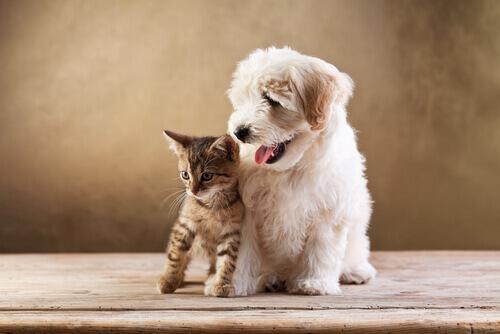 Idee per risparmiare con i vostri animali