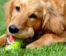 cane morde giocattolo