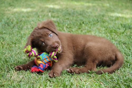 cane con in bocca giocattolo