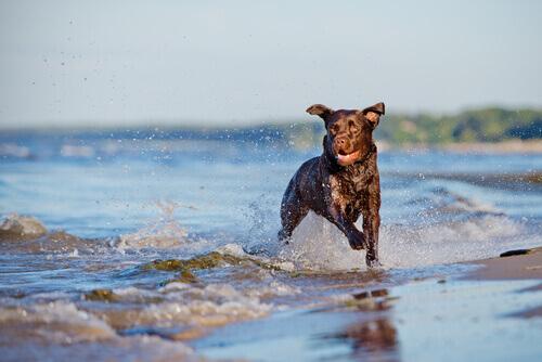 Come far rilassare il vostro cane