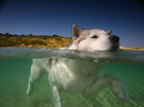 8 motivi per cui il vostro cane deve nuotare