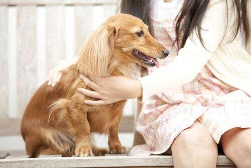 6 cose da sapere prima di accarezzare un cane