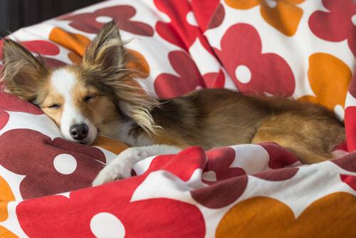 cane sognando
