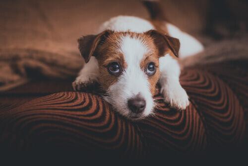 cane-solo-a-casa