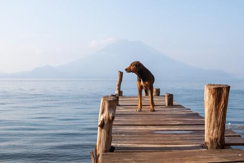cane-sul-lago
