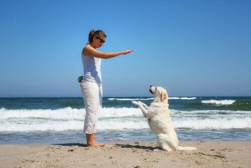 Come avere un cane ubbidiente
