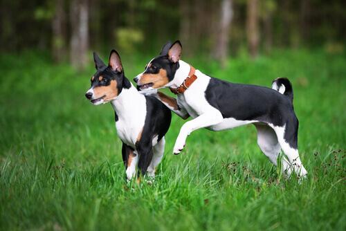 Le razze di cani più antiche del mondo